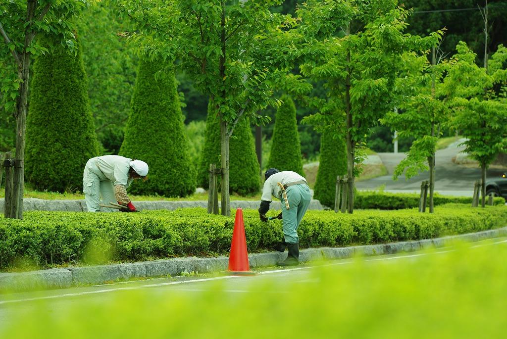造園・植栽工事、依頼するならこんな業者へ!