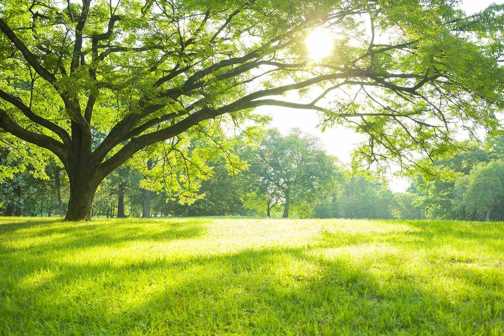 造園土木の魅力